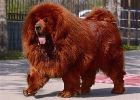le canapé le plus cher du monde le chien le plus cher du monde quotes