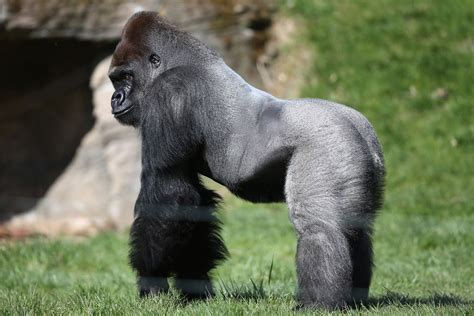 london zoo terrified visitors describe  moment zoo put