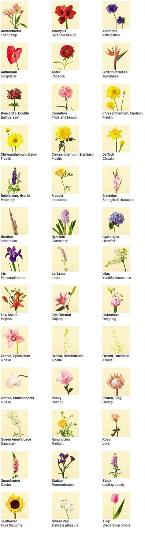 japanese flower list 25 best ideas about flowers and their meanings on pinterest flower meanings color red