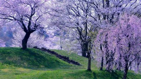 spring wallpapers  full hd p desktop