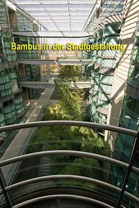 Bambus In Kübeln : bamboe hagen bamboekwekerij kimmei valkenswaard ~ Michelbontemps.com Haus und Dekorationen