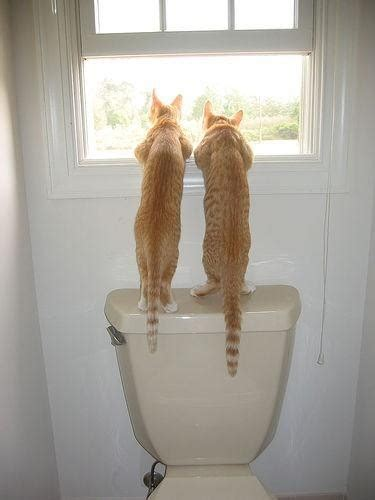 funny cats    toilet window luvbat