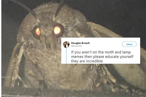 Moth Memes Are Taking Over The Internet And They Are The