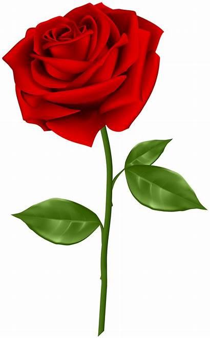 Rose Roses Flower Yopriceville Transparent Clip Flowers