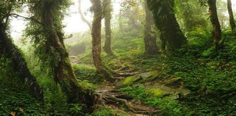 Forest loss has halved in the past 30 years, latest global ...