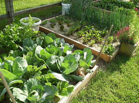 Small Backyard Vegetable Garden House Design With Diy Wood