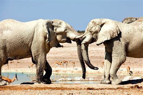 Namibia with Kids Top 10 Family Holiday Activities