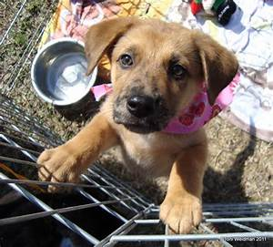 Puppy Palooza At Spca Suncoast New Port Richey Fl Saves Dogs