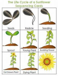 Life Cycle Of A Plant Unit
