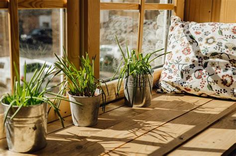 Window Sill Pillow by Pillow Rest Stock Photo Image Of Tired Beautiful