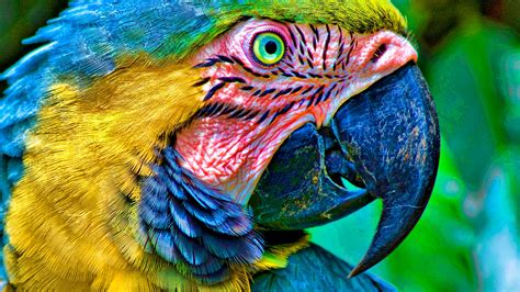 colorful parrot birds macro photo wallpapers pics
