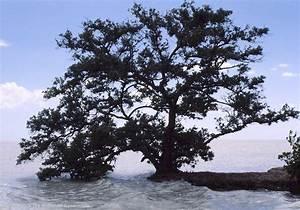 Baum Am Wasser : usa reise 1989 1990 8 monatsbericht ~ A.2002-acura-tl-radio.info Haus und Dekorationen