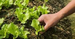Jardines verticales huichol 5 verduras faciles para for 5 cultivos faciles para empezar un huerto en casa