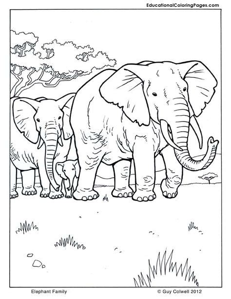 mammals coloring pages ideas coloring pages animal