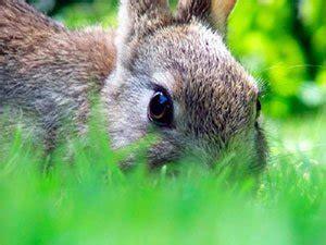rabbits   garden  expert tips