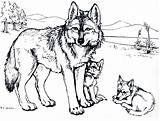 Coloring Wolf Wolves Popular sketch template