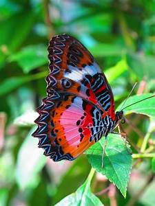 Colorful+Butterflies   stressed in the city: Malay ...