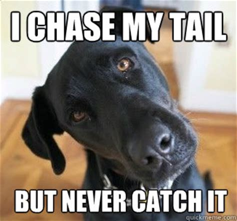 Chase Meme - i chase my tail but never catch it confused dog quickmeme