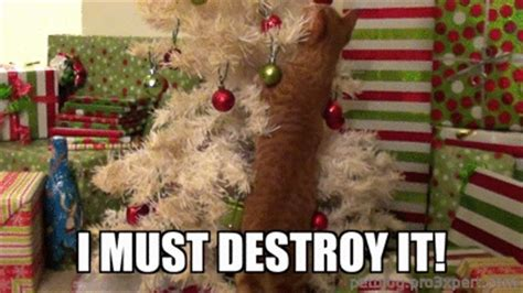 cat first seen christmas tree cats vs trees a gif collection