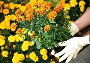 Endiviensalat Pflanzen Setzen : obi balkon und beetberater infos zu balkonblumen ~ Whattoseeinmadrid.com Haus und Dekorationen