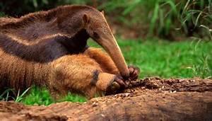 Summary of the Kingdom Animalia | Animals - mom.me