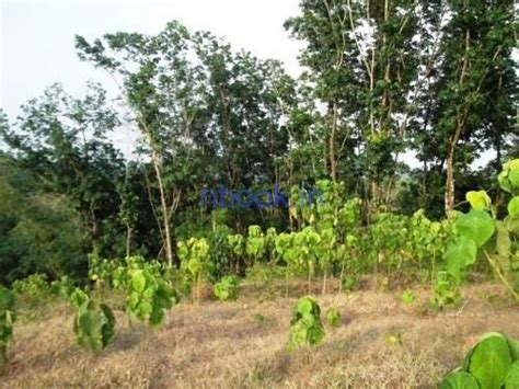 90 Cent Land For Sale Near Kolenchery| Buy,sell,rent,house