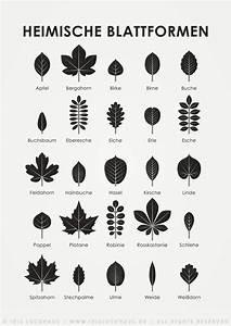 Zimmerpflanzen Auf Rechnung : die besten 25 bl tter ideen auf pinterest handfl chen pflanzenbl tter und tropische ~ Themetempest.com Abrechnung