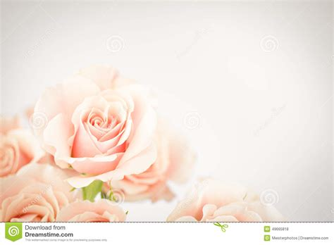 Peach Rose Cluster With Vignette Stock Photo - Image: 49665818