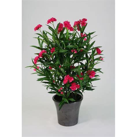 laurier entretien en pot laurier pour tous les animaux la plante est extr 234 mement toxique des feuilles au tronc et