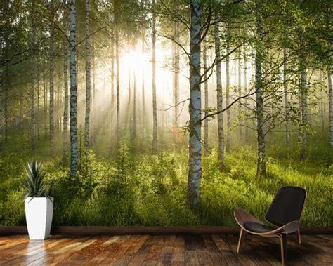 birch forest sunlight forest wallpaper room wallpaper