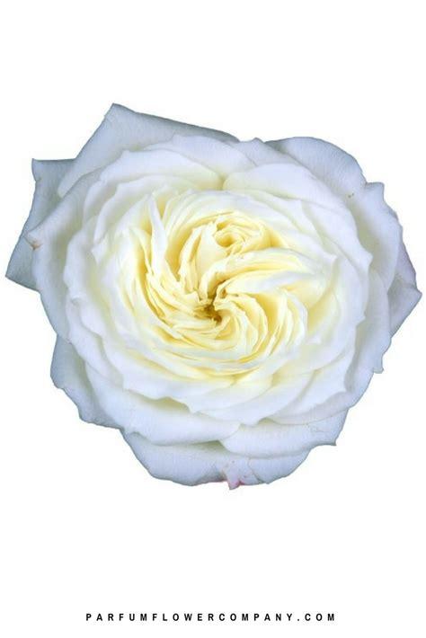 premium scented garden rose vitality parfum flower company