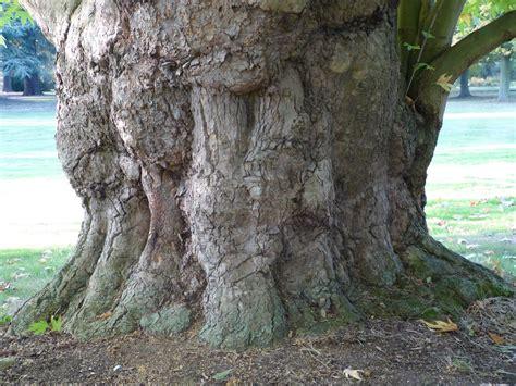 eagles eye on life tree trunks