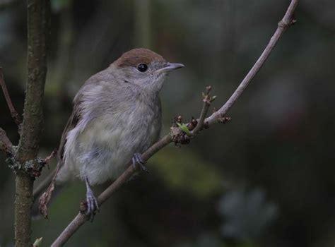 cold weather boost  garden bird numbers bto british