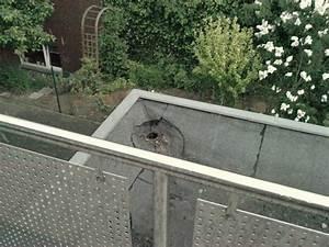 Katzen Balkon Sichern Ohne Netz : wie bekomme ich diesen balkon katzensicher katzen forum ~ Frokenaadalensverden.com Haus und Dekorationen