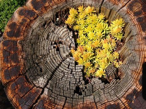 succulent planters  fun   show   plant