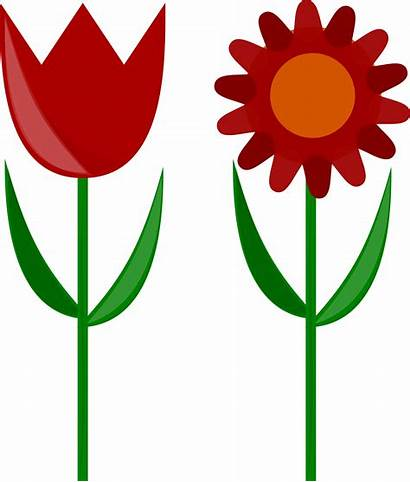 Flower Clipart Tulip Clip Flowers Stem Stems