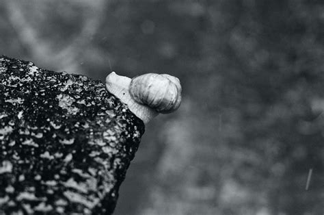 Film Xxxi Snail On A Corner By Picture Bandit On