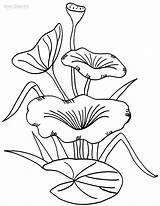 Lily Coloring Pad Pages Water Printable Drawing Flower Cool2bkids Pads Lilies Stem Line Colouring Sheet Template Plant Sheets Clipart Print sketch template