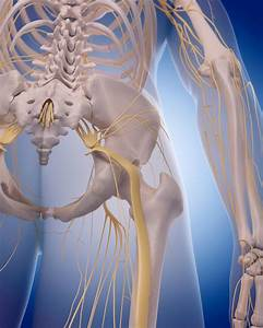 Sciatic Plus Femoral Nerve Blocks Effective On Total Hip