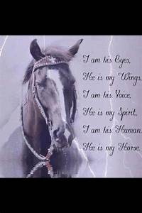 The life of a b... Free Horses Quotes