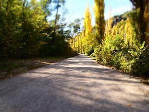 free, images, , , landscape, , tree, , nature, , forest, , path, , grass, , trail, , lawn, , sunlight, , leaf, , asphalt