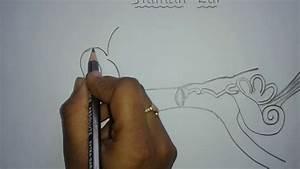 Easy Way To Draw Human Ear