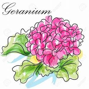 English geraniums clipart - Clipground