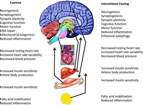 exercise energy intake glucose homeostasis