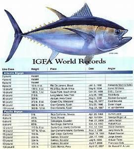 Bigeye Tuna - Severity of the Atlantic Population's ...