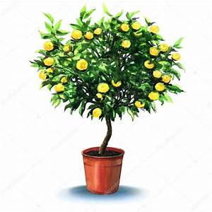 Baum Im Topf : kleine mandarinen baum im topf auf der wei en isoliert stockfoto deslns 90153738 ~ A.2002-acura-tl-radio.info Haus und Dekorationen