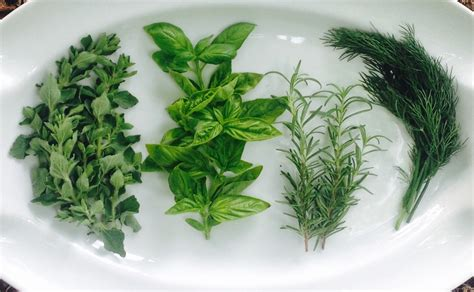 how to herbs how to preserve fresh herbs in coconut oil