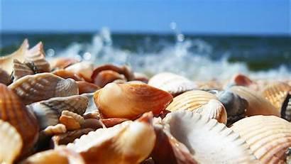 Sea Desktop Wallpapers Shells Shell Seashells Seashell