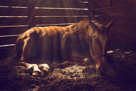 Colic In Horses All You Need To Know Animal Friends