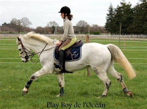 monter comme un cheval monter a cheval donne un avant gout de la liberte parfaite